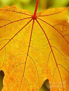 Christine Stack - Yellow Maple Leaf
