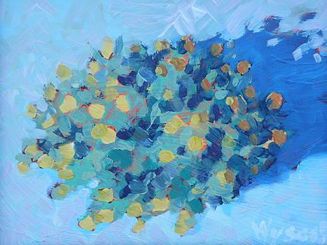 Yellow Monkey Flower  by Stephen Wysocki