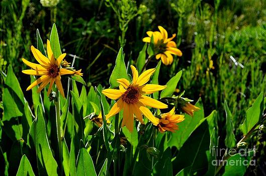 Yellow Mountain Flowers by Crystal Miller