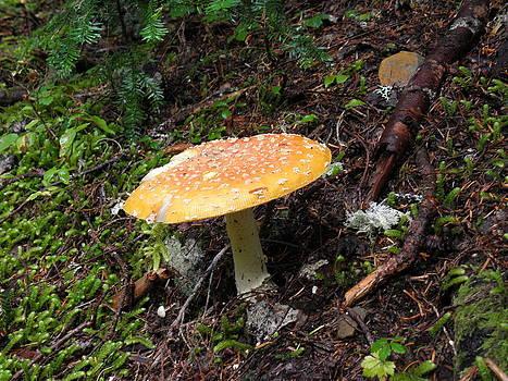 Yellow Mushroom by Charles Vana