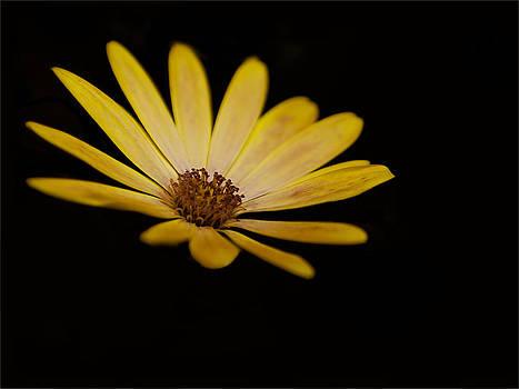Nigel Jones - Yellow on Black