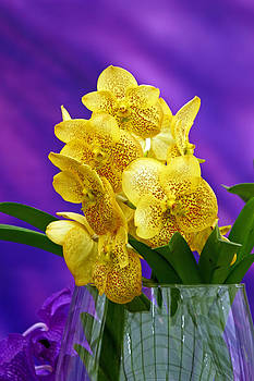 Yellow orchid in glass vase on violet background by Borislav Marinic