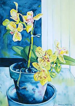 Yellow orchid by Zuzana Vass