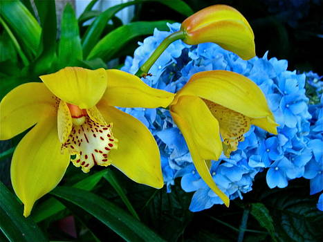 Yellow Orchids and Blue Hydrangeas by Ruth Edward Anderson