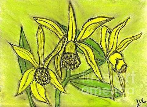 Yellow Orchids by Neil Stuart Coffey