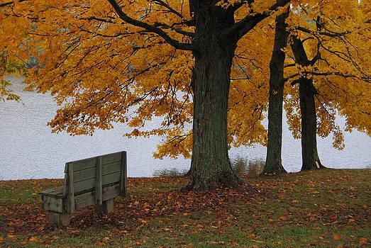 Yellow Park by Anna Liza Jones