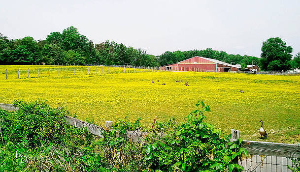 Yellow Pasture by L and D Design Photography