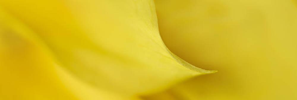 Mary Jo Allen - Yellow Petal Sweep