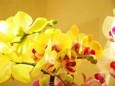 Baslee Troutman - Yellow Pink Orchids Floral Art Prints Flowers