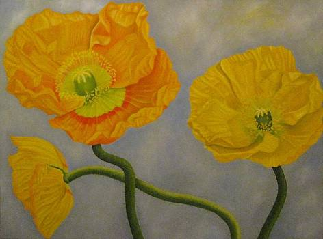 Yellow Poppies by Pera  Schillings