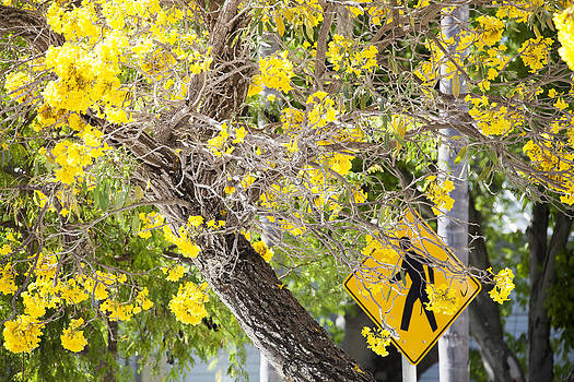 Ramunas Bruzas - Yellow