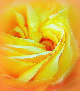 Yellow Rose Abstracted by Paula Tohline Calhoun