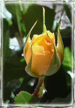 Kae Cheatham - Yellow Rose Bud