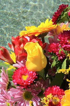 Danielle Groenen - Yellow Rose by Water