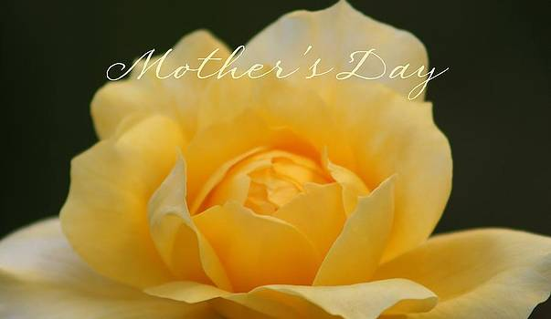 Yellow Rose for Mother by Marna Edwards Flavell