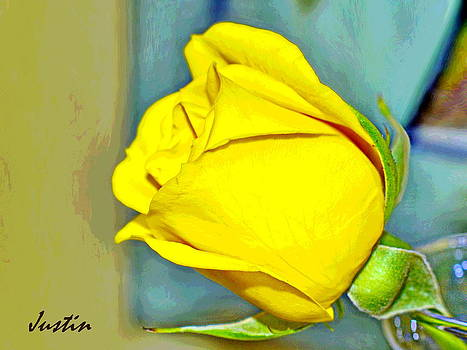 Yellow Rose by Iustin Cret