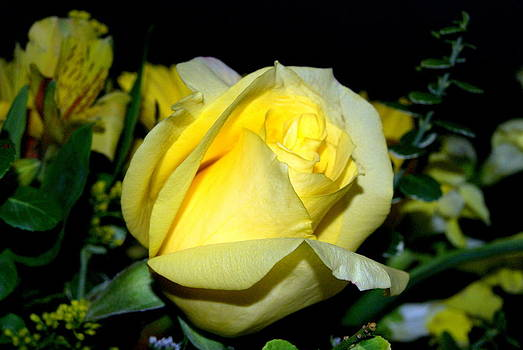 Yellow rose of Texas by Michelle Cawthon