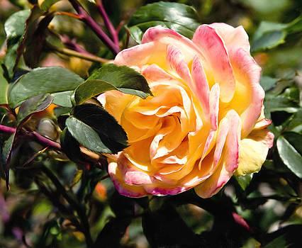 Yellow Rose by Patrick Derickson