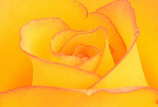 Yellow Rose by Silvie Gunawan