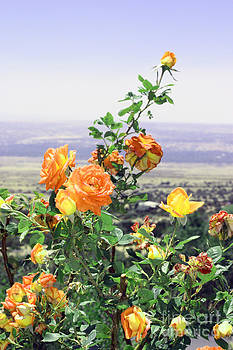 Yellow Roses by Terri Maddin-Miller