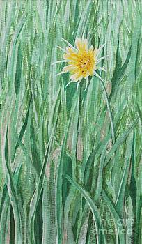 Yellow Salsify by Shirley Miller