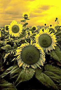 James Steele - Yellow Sky Yellow Flowers.