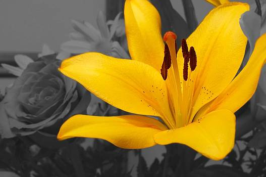 Yellow Spring I by Galexa Ch