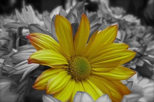 Yellow Spring II by Galexa Ch