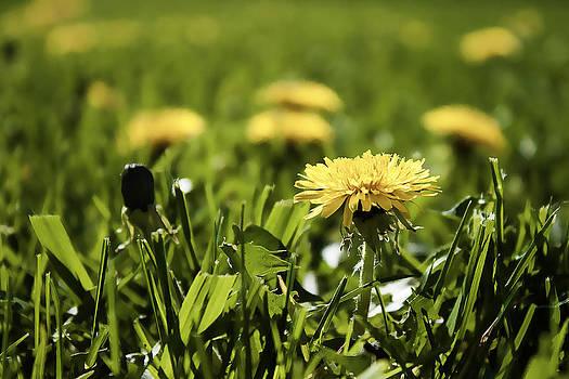 Milena Ilieva - Yellow Spring