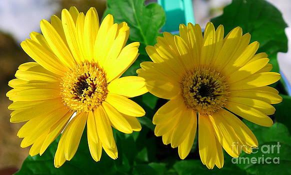 Yellow Spring by Nancie DeMellia