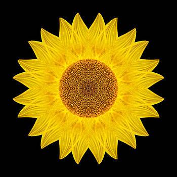 Yellow Sunflower IX Flower Mandala by David J Bookbinder