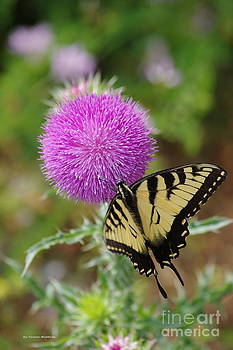 Yellow swallowtail and the Thistle by Tannis  Baldwin