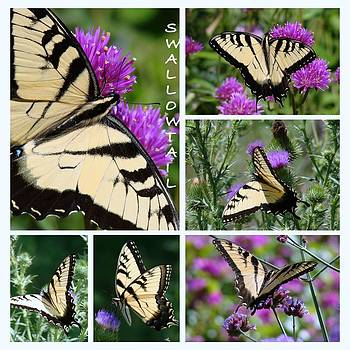 Rosanne Jordan - Yellow Swallowtail Butterfly