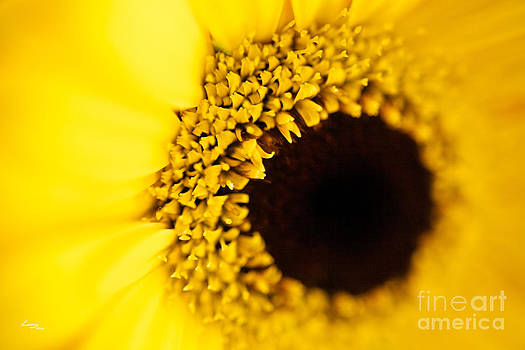 Yellow by T Lang