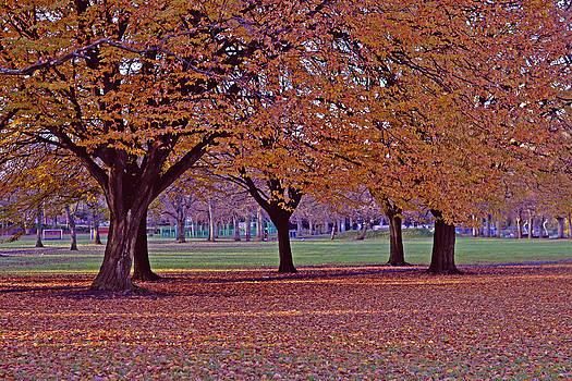 Yellow trees by Nadeesha Jayamanne
