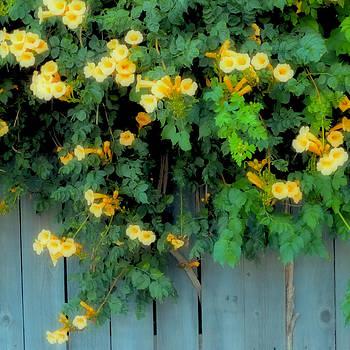 TONY GRIDER - Yellow Trumpet Blooms Polaroid ll