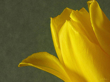 Julie Magers Soulen - Yellow Tulip