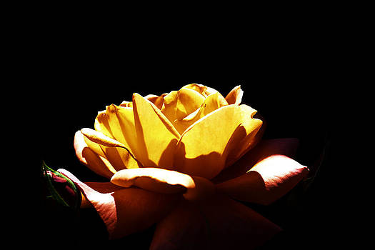 Yellow by Vishal Kumar