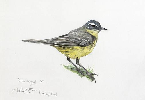 Michael Earney - Yellow Wagtail