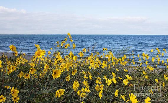 Barbara McMahon - Yellow Wind