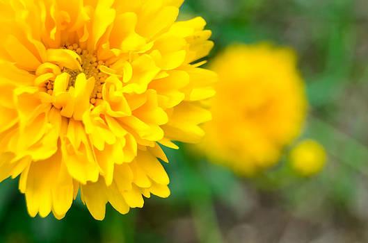 Alexandre Martins - Yellow Yellow Yellow