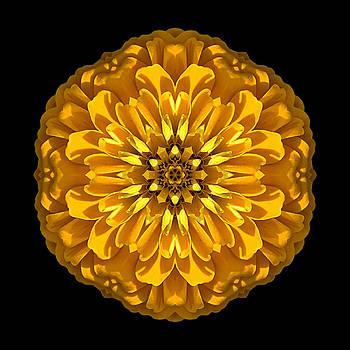 Yellow Zinnia Elegans Flower Mandala by David J Bookbinder