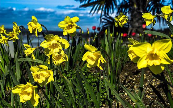 Yellowsome by Blanca Braun