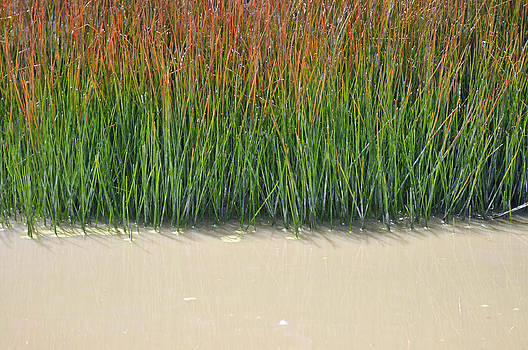 Yellowstone Autumn Grasses Near Hot Pool by Bruce Gourley