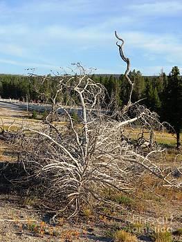 Yellowstone Moments 01 by Ausra Huntington nee Paulauskaite