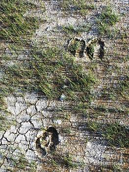 Yellowstone Moments 05 by Ausra Huntington nee Paulauskaite