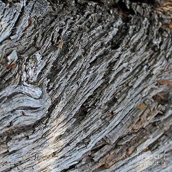 Yellowstone Moments 08 by Ausra Huntington nee Paulauskaite