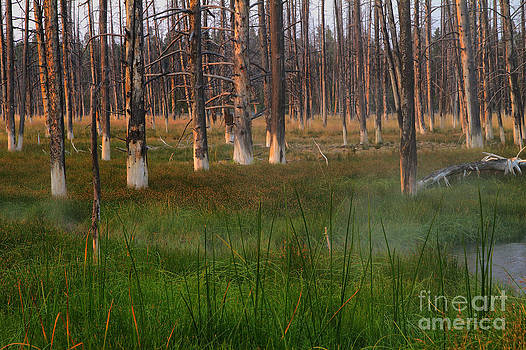 Teresa Zieba - Yellowstone Mysterious Morning