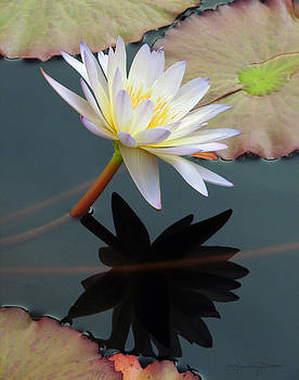 Yin and Yan of Water Lilies by Karen Casey-Smith