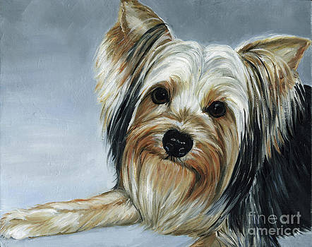 Yorkie by Charlotte Yealey